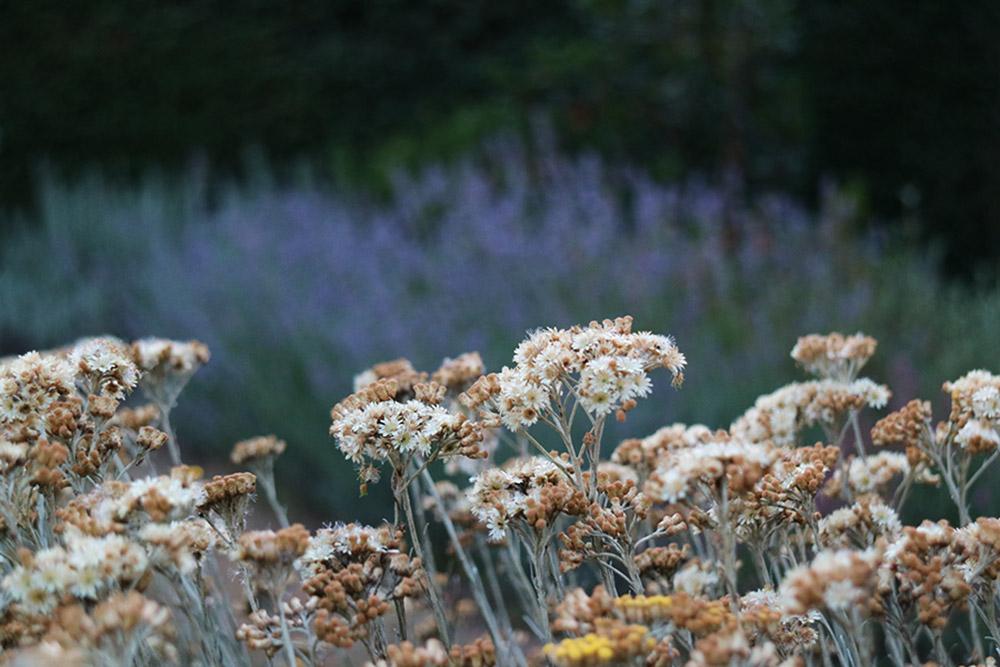 Giardino naturale, Riano | Stefano Assogna - Garden Tutor