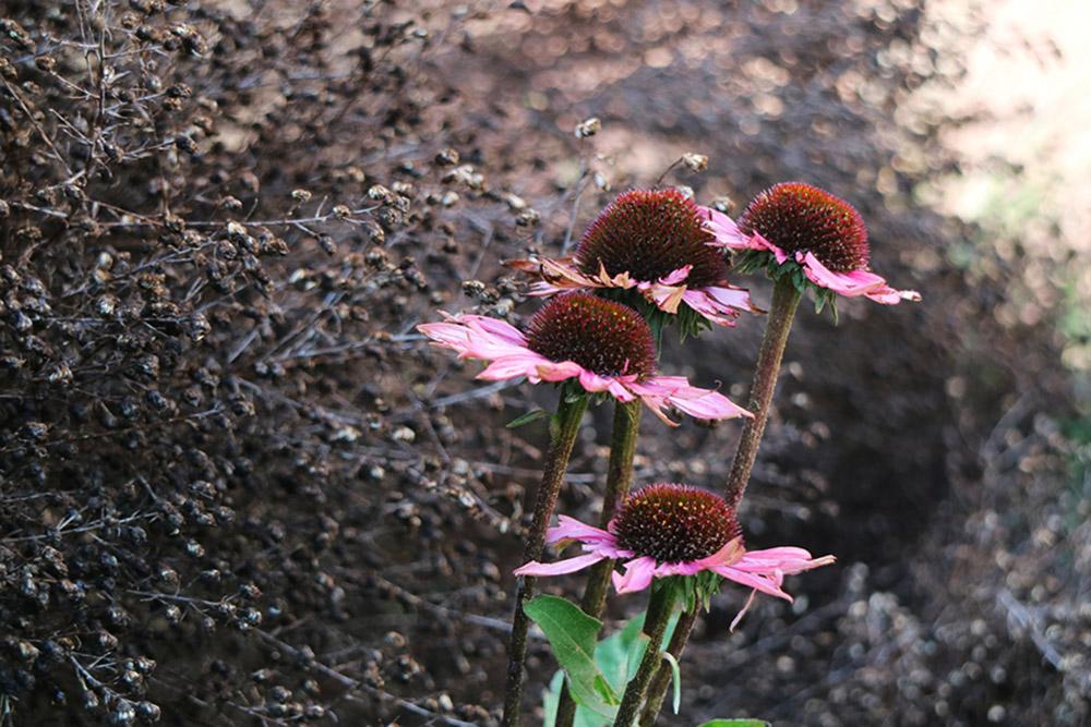 L'antico incontra il moderno, Tarquinia | Stefano Assogna - Garden Tutor