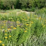 Giardino Mediterraneo Primavera