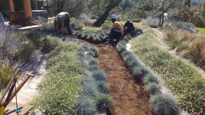 Realizzazione di un giardino mediterraneo