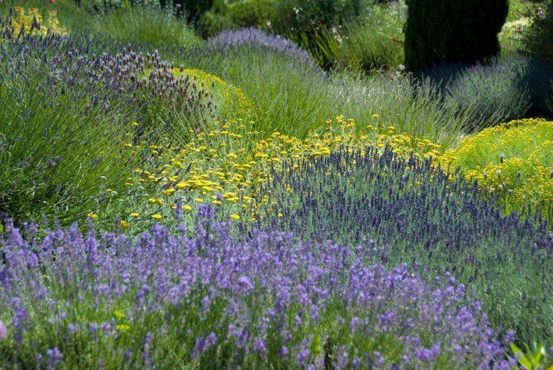 olivier filippi garden