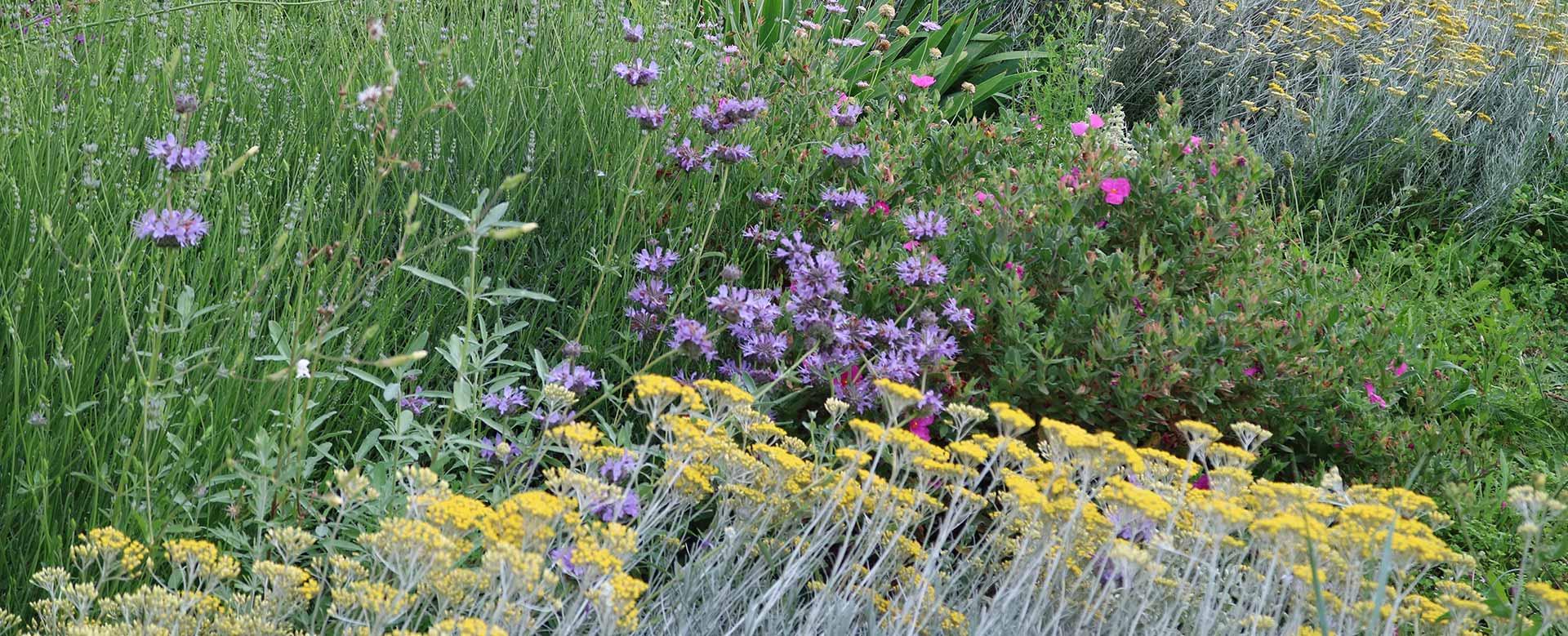 Garden Designer - Consulente | Stefano Assogna